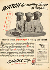1947 vintage AD GAINES MEAL DOG FOOD  3 cute BOXER puppies  050415