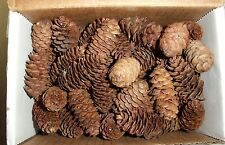"""PINE CONES 50 """"REAL"""" TINY SPRUCE PINE CONES  .5 -1 INCHES TALL (GREAT CRAFTING)"""