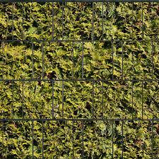 Lebensbaum gelb - Sichtschutzstreifen Doppelstabmattenzaun Sichtschutz - PVC Fre