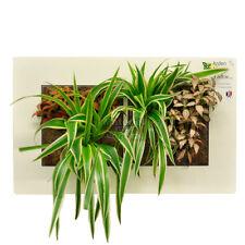 Cadre végétal Arden Flore Double Blanc 49x30cm (tableau végétalisé plantes déco)