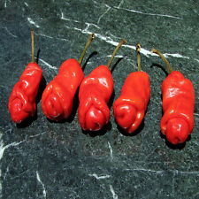 20pcs annuum Organic Peter Pepper Seeds funny Capsicum Yard Garden Free Shipping