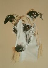 WHIPPET *  * Windhund*  *   LIMITED  PRINT  HeadStudy