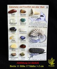Mineralien Fossilien Sammlung mit 12 Mineralien Edelsteine aus aller Welt