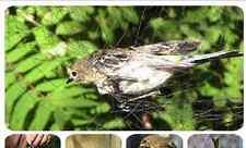 Japannetz4mx2,5m x16mm  70D/2ply   Uccello Rete  Vogelfalle Mist net Bird trap
