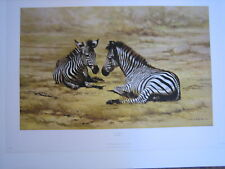 DAVID SHEPHERD AFRICAN CHILDREN – zebra - LIMITED EDITION