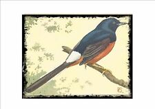 Shama Thrush Vintage  Wall Plaque Cage Bird Picture Sluis Aviary Sign