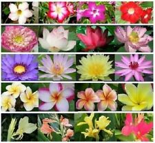Water Lily+Lotus+Canna+Plumeria+Adenium FRESH SEED POND PLANTS +Free Doc