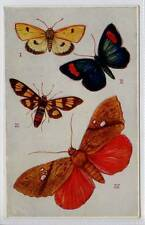 (Gb358-100) Tuck Oilette, Butterflies Series 1, Foreign c1905 Unused EX