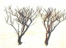 "40-Pack Manzanita Branches 18""- 24"" trimmed DIY Wedding Centerpieces"
