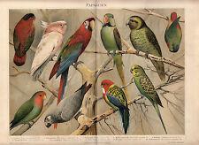1896 Antique Chromolithograph Print German Meyers PAPAGEIEN PARROTS JAKO BIRDS