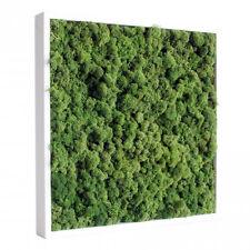 Tableau végétal stabilisé Lichen Vert Nature 40x40cm (cadre mur décoration)