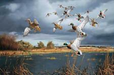 David A. Maass THREATENING SKIES - MALLARDS Limited Edition Print - Ducks