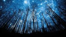 A439 STUNNING FOREST AT NIGHT MOON AND STARS Large Wall Canvas Print 20x30 Inch