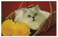 WHAT'S NEW PUSSYCAT? White In a BASKET Vintage Postcard Cat Kitten Yellow Flower