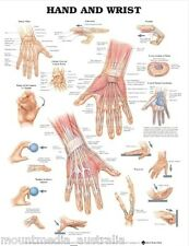 HAND AND WRIST POSTER (66x51cm) ANATOMICAL CHART HUMAN BODY MEDICAL ANATOMY