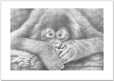 Baby Orangutan A4 Wildlife Fine Art Print Animal Ape Pencil Drawing Picture