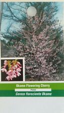 Okame Flowering Cherry Tree 5gal Home Garden Plants Landscape Trees Plant Flower