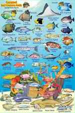 "Franko Cozumel Reef Creatures Guide Laminated Fish Identification Card 4"" x 6"""