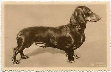 CHIEN TECKEL DACHSHUND DOG . BASSET.  PUBLICITé CHOCOLAT MARTOUGIN