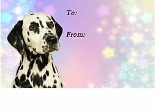Dalmatian Dog Self Adhesive Gift Labels by Starprint