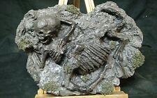 MUMMIFIED CENTUR  FOSSIL DISPLAY,SIDESHOW GAFF,MYTH,FREAK,WEIRD,CURIO,ODDITY