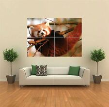RED PANDA CUB NEW GIANT POSTER WALL ART PRINT PICTURE G794