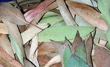 30g Scented Gum Tree Leaves UK-Grown Dried Eucalyptus Mix Organic Herbal Remedy