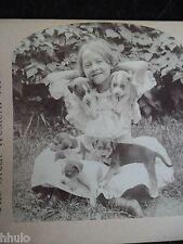 STA252 Scène de genre fillette avec chiots vintage Photo 1900 STEREO stereoview