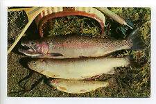There's Good Fishing in Maine, ME, fish, rainbow trout?, 1956 sticker on back