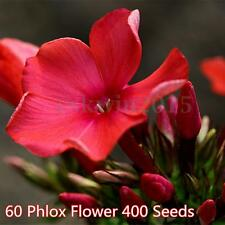 400 Seeds Phlox  Cuspidate Twinkle Red Flower Seeds Plant Home Garden Decor