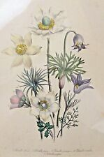 ANTIQUE 1843 LOUDON LITHO ART PRINT - THE LADIES COMPANION TO THE FLOWER GARDEN