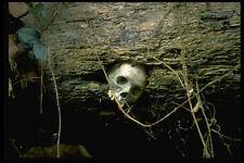 446003 cueva de entierro sigue siendo Sulawesi A4 Foto Impresión