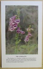 circa 50's / 60's Collectors Card - Cassell's Nature Cards Series A # 23