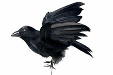 2 Artificial Crows Halloween Decoration Fake Crow Raven Feathered Crows Radcliff