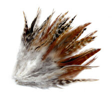 100 PC Natural stripe pheasant feathers 6-8 inch /15-20 cm