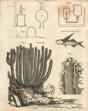 1802  Eudiometer Euphorbia And Flying Fish Copperplate