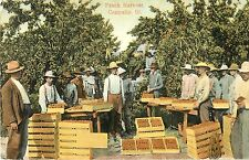 Workers Pose by Their Bounty, Peach Harvest, Centralia IL