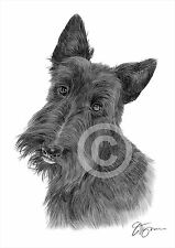 Pet portrait SCOTTISH TERRIER artwork print A4 only signed artwork Scotty dog