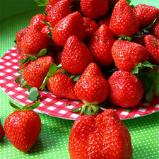 100pcs Red Blue Black Strawberry Climbing Strawberry Seeds Fruit Plant Seed