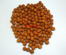 5 MUKHI RUDRAKSHA RUDRAKSH LOOSE BEADS SIZE 9.5 - 10 MM WHOLESALE LOT OF 551