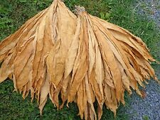 Virginia Brightleaf Tobacco Seed - Old World Hierloom Variety - 300 Seeds