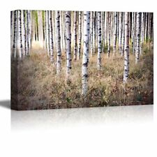 """Canvas Prints - Grove of Birch Trees and Dry Grass in Early Autumen- 24"""" x 36"""""""