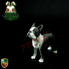 ACI Toys 1/6 Dog_ Boston Terrier _Animal Pet Diorama Bid AT068Z