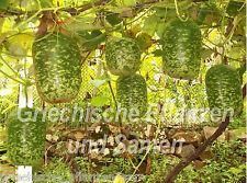 Apfel-Kalebasse * Zier-Kürbis * 5 Samen *tolle Dekoration und Geschenk Vogelhaus