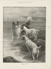 ROUGH COLLIE AND FOX TERRIERS SEA SCENE ANTIQUE DOG PRINT FROM 1899