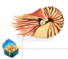 Chambered Nautilus Sea Creatures Animal Part I 4D 3D Puzzle Model Kit Toy