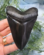 SUPER SERRATED 4'' MEGALODON TOOTH REPLICA, BEAUTIFUL!/FOSSIL SHARKS TOOTH TEETH
