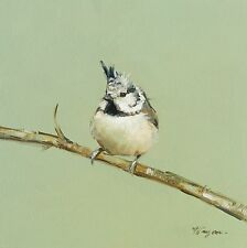 Original Oil painting - wildlife - bird art - crested tit - by j payne