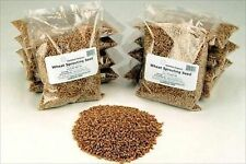 ORGANIC WHEAT-10 LBS-HARD RED-FOOD STORAGE, WHEATGRASS SEED, BREAD, FLOUR, GRASS