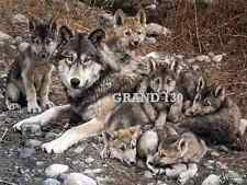 Collectable Art Work - 8.5 x 11 Prints - Wolf and Her Pups